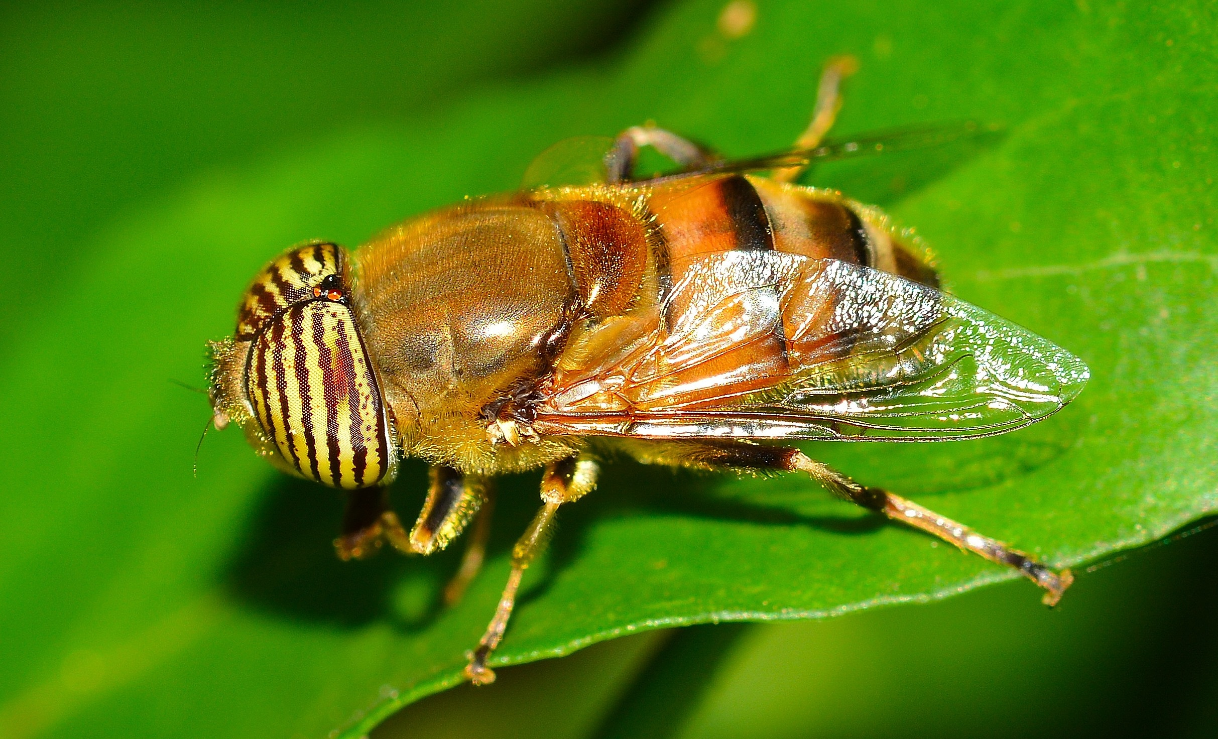 macro photography insects tutorial