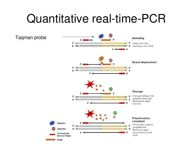 real time pcr protocol tutorial